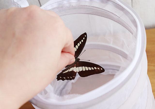 ダイソー 昆虫採集網 使用例